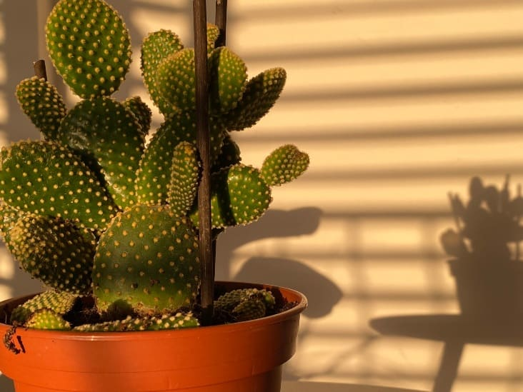 Does Cactus Need Direct Sunlight?